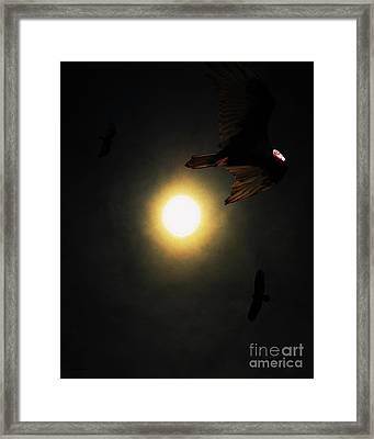 The Vultures Have Gathered In My Dreams . Portrait Cut Framed Print by Wingsdomain Art and Photography