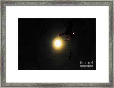 The Vultures Have Gathered In My Dreams Framed Print by Wingsdomain Art and Photography