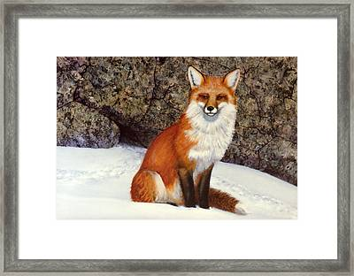 The Wait Red Fox Framed Print