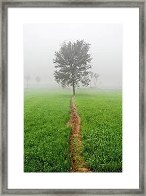 The Walking Tree Framed Print