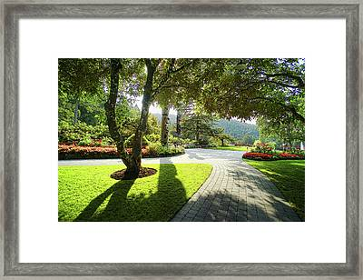 The Walkway Framed Print by Lawrence Christopher