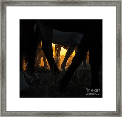 The Wandering Few Framed Print by Nicole Markmann Nelson