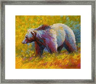 The Wandering One - Grizzly Bear Framed Print by Marion Rose