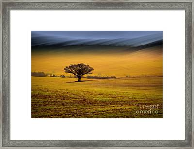 The Wanted Tree Framed Print by Richard Thomas
