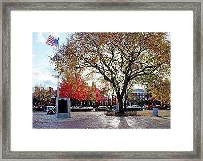 The Washington Elm Framed Print