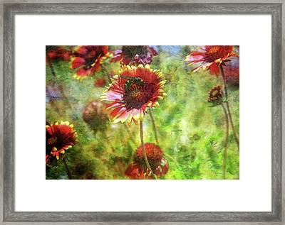 The Wasp On His Blanket 0508 Idp_2 Framed Print