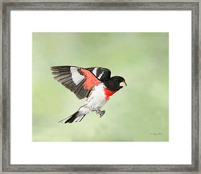 The Watcher Framed Print by Gerry Sibell
