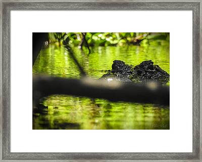 The Watcher In The Water Framed Print