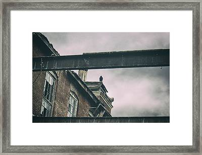 The Watcher Framed Print by Off The Beaten Path Photography - Andrew Alexander