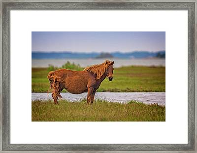 The Watcher Framed Print by Rick Berk