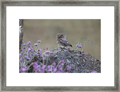 The Watcher Watched Framed Print