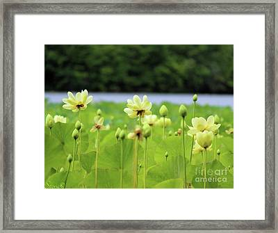 The Water Fields  Framed Print