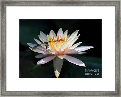The Water Lily And The Dragonfly Framed Print