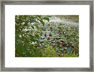 The Water Lily Pond Framed Print by Molly Dean