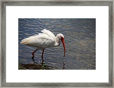 The Water's Edge Framed Print