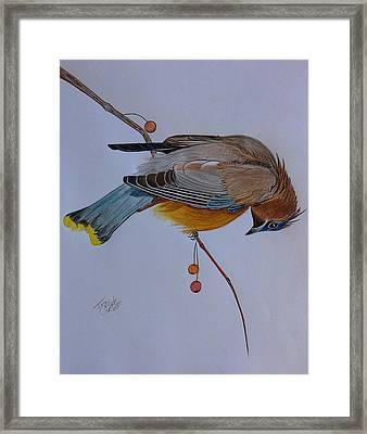 The Waxwing  Framed Print