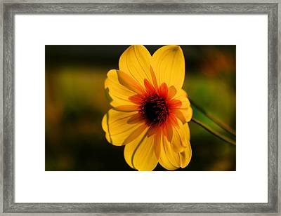 The Way A Blossom Smiles Framed Print by Jeff Swan