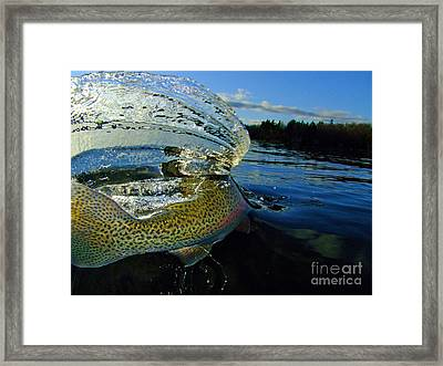 The Way Of The Trout Framed Print by Brian Pelkey