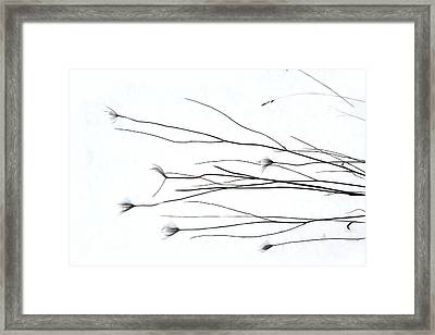 The Way Of The Wind Framed Print