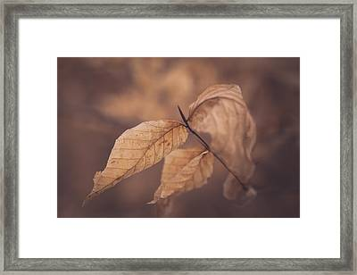 The Way Things Have Not Fallen Framed Print by Shane Holsclaw