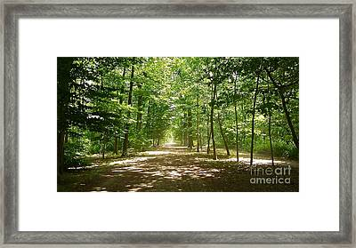 The Way Through The Woods Framed Print by Alex Cassels