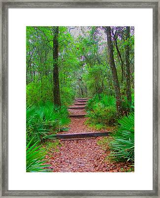 The Way Up Framed Print by Judy  Waller