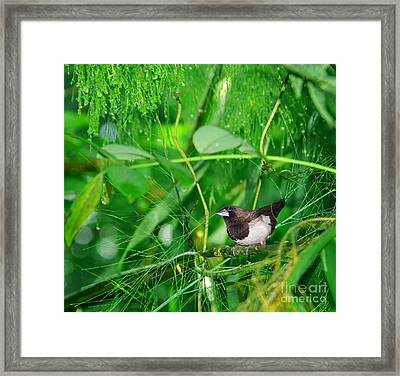 The Weaver.. Framed Print by Prar Kulasekara