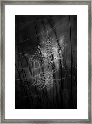 The Weaver Framed Print by Ron Jones