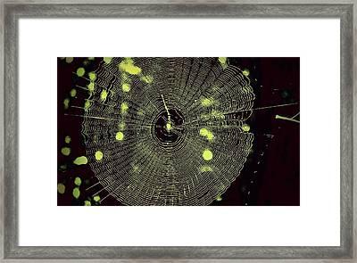 The Web Framed Print by Jill Tennison