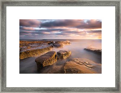 The Web Of Nature Framed Print