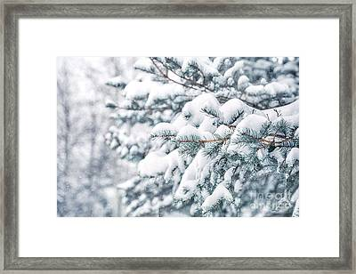The Weight Of Winter Framed Print by Evelina Kremsdorf