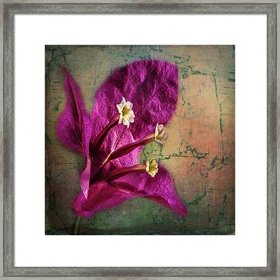 Framed Print featuring the photograph The Well Dressed Bougainvillea by Bellesouth Studio