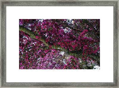 The Whistling Tree Limb Framed Print