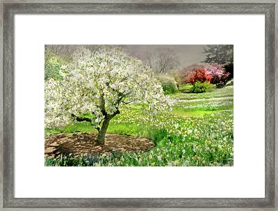 Framed Print featuring the photograph The White Canopy by Diana Angstadt