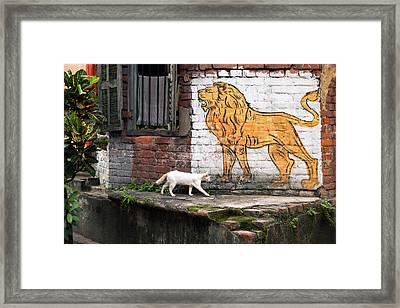 The White Cat Framed Print