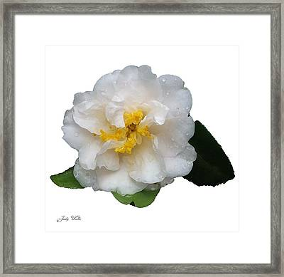 The White Flower Framed Print by Judy  Waller