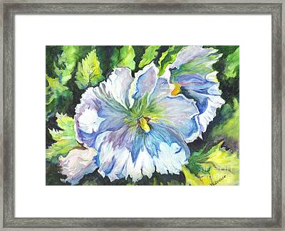 The White Hibiscus In Early Morning Light Framed Print by Carol Wisniewski