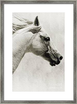 The White Horse IIi - Art Print Framed Print