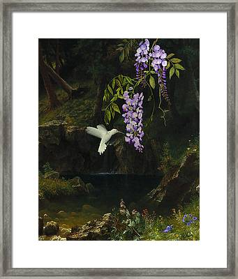 The White Hummingbird Framed Print by Spadecaller