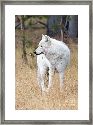 The White Lady Framed Print