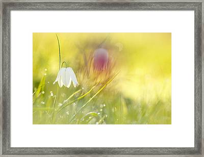 The White Queen Framed Print
