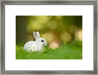 The White Rabbit Framed Print by Roeselien Raimond