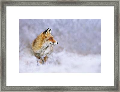 The White, Red And Blue- Red Fox In The Snow Framed Print by Roeselien Raimond