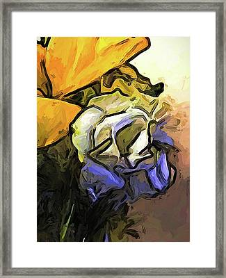 The White Rose And The Yellow Petals Framed Print