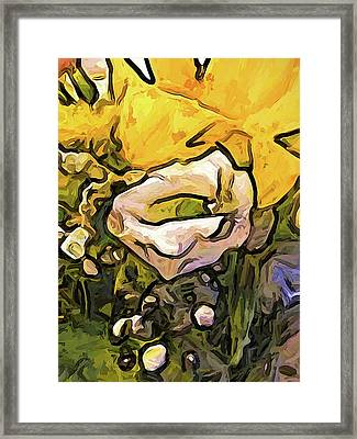 The White Rose With The Eye And Gold Petals Framed Print