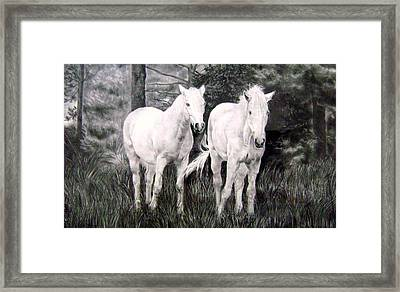 The White Stallions Framed Print