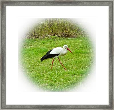 The White Stork Looking For The Branches Framed Print