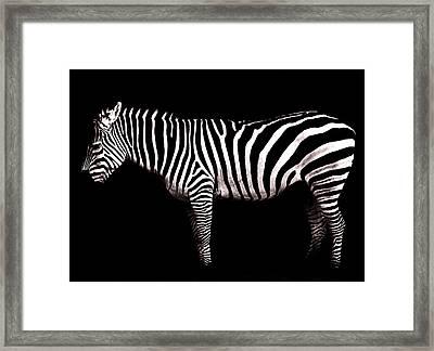The White Stripes Framed Print by Osvaldo Hamer