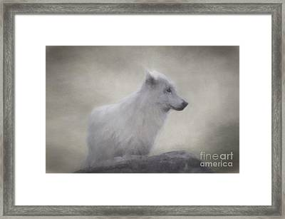 The White Wolf. Framed Print by Robert Brown