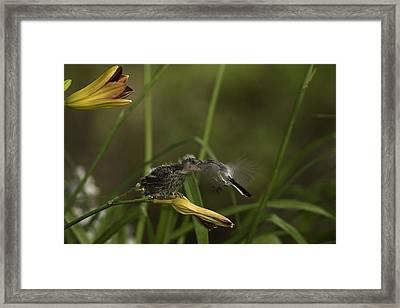 The Whole Bug 8 Framed Print by E Mac MacKay